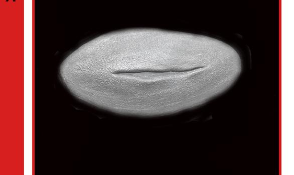 TSW1 - silicone/ wound / cut